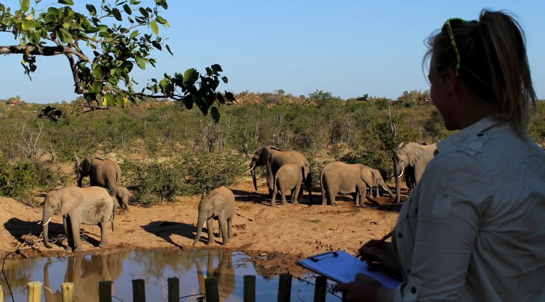 Voluntarios ambientales identificando elefantes como parte de su labor de conservación de vida salvaje en Botsuana.
